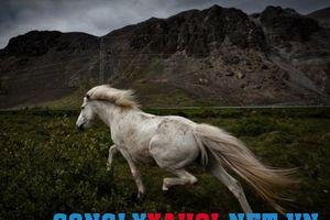 Ngựa trời