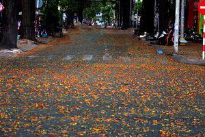 Đường phố nhuộm vàng cánh sao đen, người Sài Gòn lạc lối giữa mùa hè