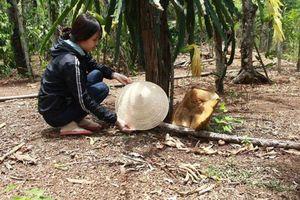 Phát hiện cây nấm to bằng chiếc nón, lớn nhanh như 'thổi'