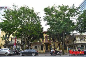 Hà Nội: Hàng cây sưa quý hiếm chuẩn bị di dời để xây ga ngầm