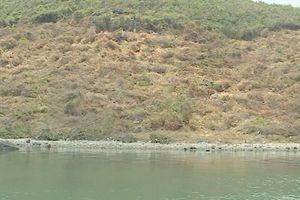 Tạm dừng chuyển nhượng đất ở Bắc Vân Phong