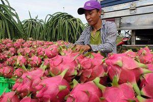 Vẫn đang 'gỡ khó' cho xuất khẩu nông sản sang Trung Quốc