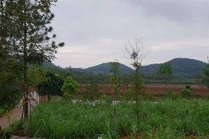 Thứ trưởng Bộ TN-MT thu mua hàng ngàn mét vuông đất lâm trường?