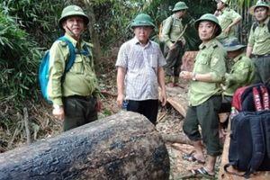 Quảng Nam: Áp lực công việc, nhiều kiểm lâm xin nghỉ việc