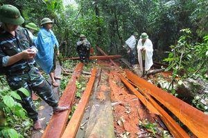 Để rừng phòng hộ bị 'xẻ thịt': Kỷ luật hàng loạt cán bộ kiểm lâm Quảng Bình