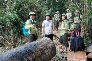 Quảng Nam: Đang nóng chuyện phá rừng thì hàng loạt kiểm lâm xin nghỉ việc