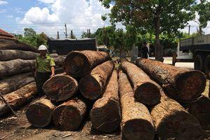 Vụ trùm gỗ lậu Phượng 'râu': 9 cán bộ kiểm lâm tự nhận hình thức kỷ luật