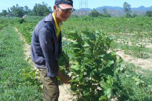 Quảng Nam: Gian nan giữ nghề dệt lụa