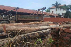 Vụ phá đường dây gỗ lậu của Phượng 'râu': Kỷ luật 9 cán bộ kiểm lâm