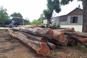 Trùm gỗ Phượng 'râu' bị bắt, 9 cán bộ kiểm lâm tự nhận kỷ luật