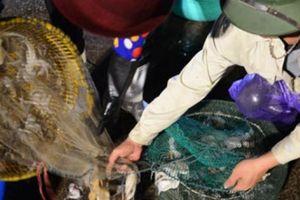 Chen chân ở chợ hải sản rạng sáng bên vịnh Hạ Long