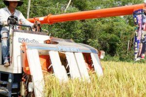 Giống lúa Thái Bình tạo mùa vàng ở đất 'chưa mưa đã thấm'