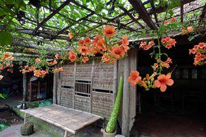 Từng bước giải quyết mâu thuẫn bảo tồn làng cổ Đường Lâm