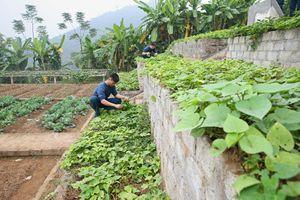 Chuyện trồng rau trên đất sỏi