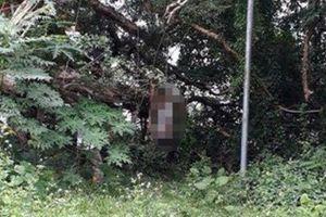 Phú Thọ: Người đàn ông treo cổ tự tử vì bị nghi ăn trộm điện thoại