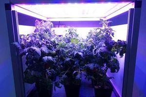 Sẽ có một vườn rau trên trạm vũ trụ ISS