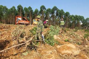 Bắc Giang: Điều tra vụ 2 gia đình hỗn chiến vì tranh chấp đất rừng