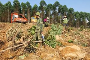 Hai gia đình 'choảng' nhau vì tranh chấp đất rừng
