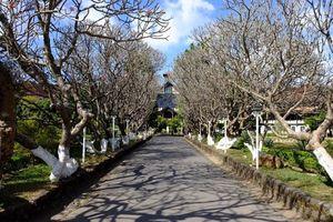 Lạc vào những cung đường đẹp như trên phim Hàn ở Tây Nguyên