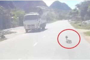 Bố ngủ say, con bò lổm ngổm trên quốc lộ giữa trưa nắng