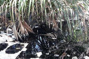 Dân than trời với con kênh ô nhiễm nặng giữa lòng TP.Cà Mau