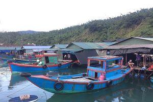 Hà Tĩnh: Chính thức chuyển 18 bè 'mực nhảy' Vũng Áng đến Eo Bạch