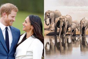 Sắp có thêm đám cưới Hoàng gia, nhiều người lại thắc mắc công nương hoàng tử hay đi đâu trăng mật?