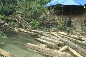 Cảnh cáo Phó Chủ tịch huyện vì để xảy ra vụ phá rừng nghiêm trọng