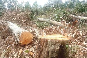 Đắk Nông: Liên tiếp xảy ra 2 vụ phá rừng