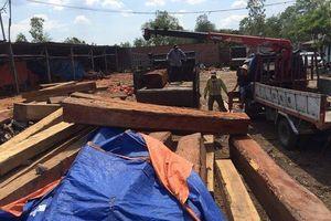 Đột kích xưởng gỗ, bắt khẩn cấp đối tượng nghi mua bán, tàng trữ gỗ trái phép