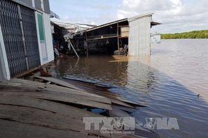 Liên tiếp xảy ra sạt lở đất ven sông ở huyện Năm Căn, Cà Mau