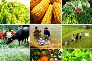 Ước lượng năng suất nhân tố tổng hợp sản xuất lương thực tại Việt Nam