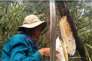 Nghề gác kèo ong mật ở vùng U Minh Thượng