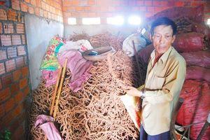 Tiếp về vụ nông dân đào bán rễ hồ tiêu: Khuyến nghị của Sở NNPTNT Đồng Nai có vội vã?