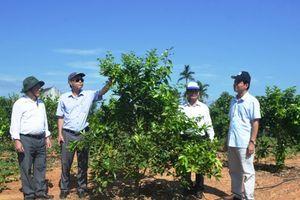 HLV -TT Hà Tĩnh: Hướng đến làm vườn mẫu nông nghiệp hữu cơ