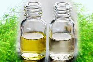 Dầu tràm bán tràn lan chỉ có 20-30% là tinh dầu nguyên chất