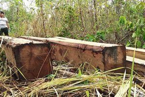 Khởi tố vụ phá rừng tại núi Chư Jú