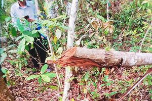 Chủ tịch tỉnh Bắc Kạn chỉ đạo xử lí nghiêm vụ phá rừng nghiêm trọng ở An Thắng