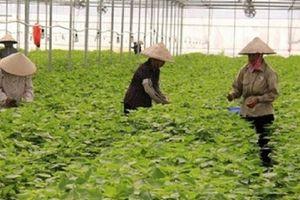 Những nông sản Việt có giá cao ngất ở nước ngoài
