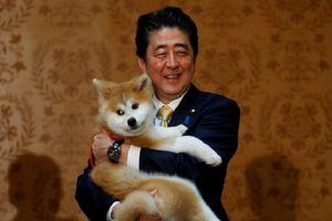 Thủ tướng Nhật tặng chó cưng cho 'nữ hoàng trượt băng Nga'