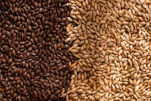 Những dấu ấn đặc biệt từ nước giải khát lên men từ lúa mạch đầu tiên ở Việt Nam