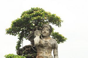 Xôn xao 'cây Thạch Sanh' được báo giá hơn 4 tỷ đồng ở Hải Dương