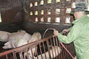 Hà Nội: Tập trung thực hiện chống nóng cho gia súc, gia cầm