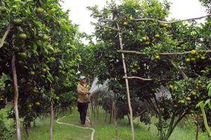 Xây dựng vùng nguyên liệu trái cây - Bài 1: Chủ động vùng nguyên liệu tập trung
