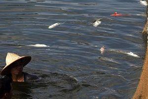 Cá chết hàng loạt ở hồ Hoàng Cầu do 'thời tiết thất thường'