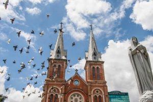 Du khách thích thú 'chơi' với chim bồ câu ở nhà thờ Đức Bà