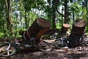 Vận chuyển gỗ bằng xe máy, một thanh niên tử vong