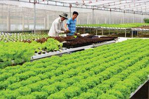 Chuỗi giá trị nông sản chiều lòng khách hàng khó tính