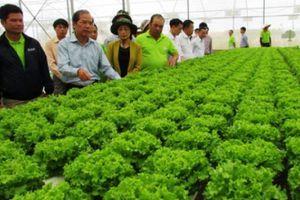 'Lượn' vườn rau, hoa công nghệ cao, đồi chè trên cung đường 1500m
