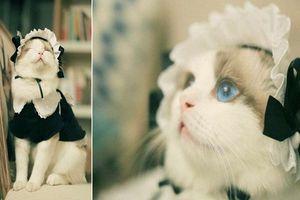 Gặp gỡ cô mèo giúp việc đáng yêu nhất thế giới